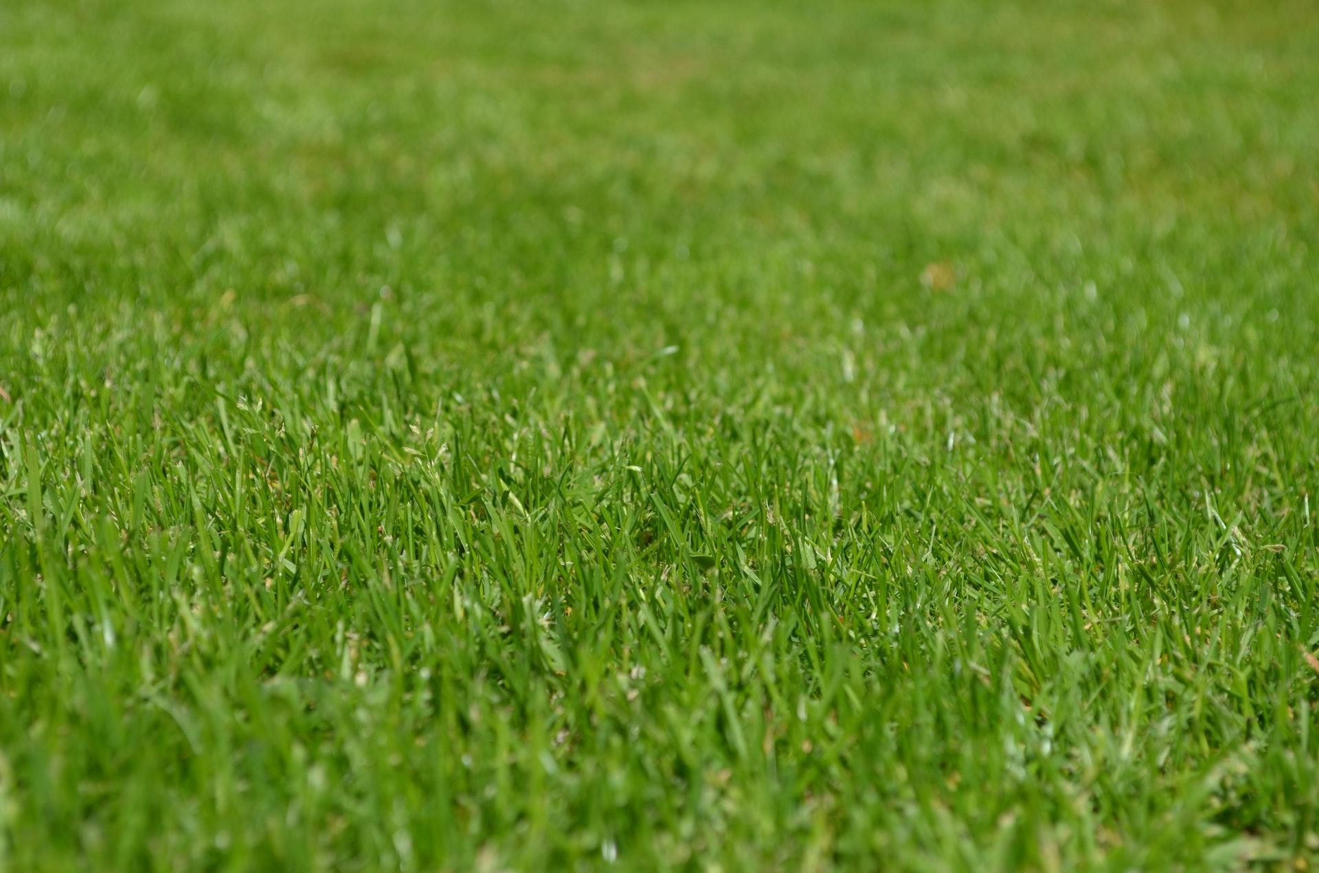 Gras - Homepage